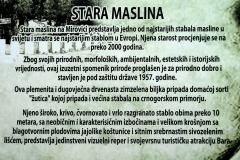 1024px-Old_olive_stara_maslina_info_tabla